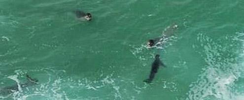 foca monje del Mediterráneo
